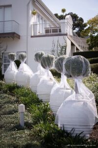 Wedding white lollipop trees